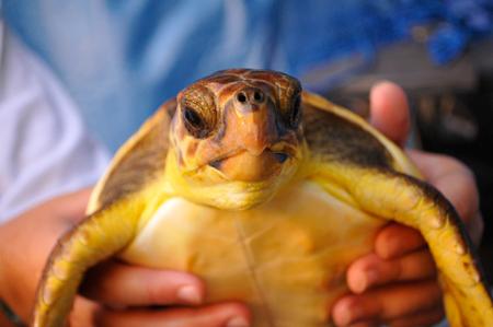 Pisa: sequestrate tartarughe di specie protetta
