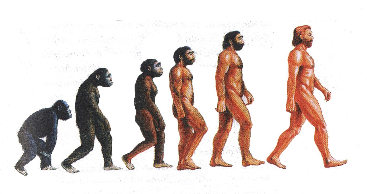 L'evoluzione dell'uomo secondo la scienza