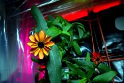 fiori nello spazio