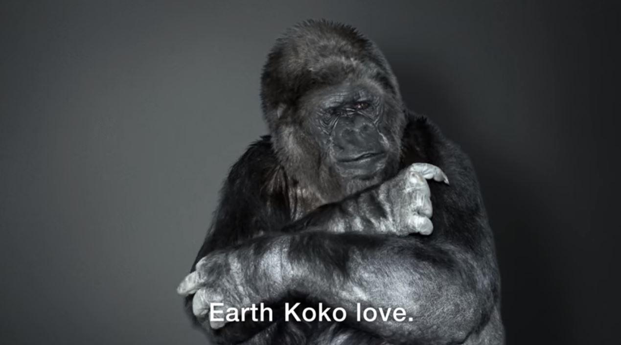 Il commovente messaggio di Koko.