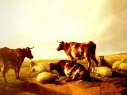 mucche e pecore