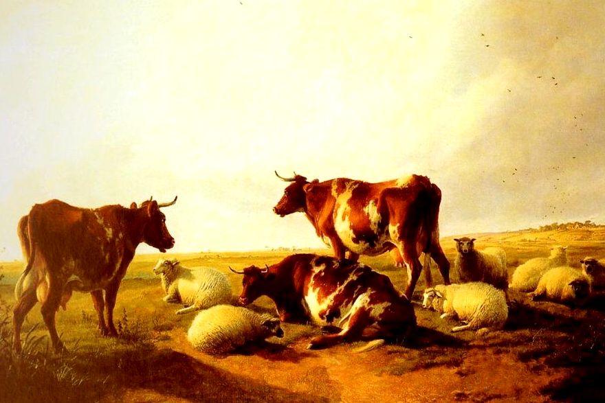 Mucche e pecore le vedremo negli zoo. Razze a rischio estinzione