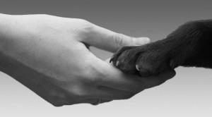 diritti animali 672x372