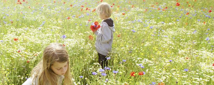Antistaminici naturali: come combattere l'allergia senza farmaci