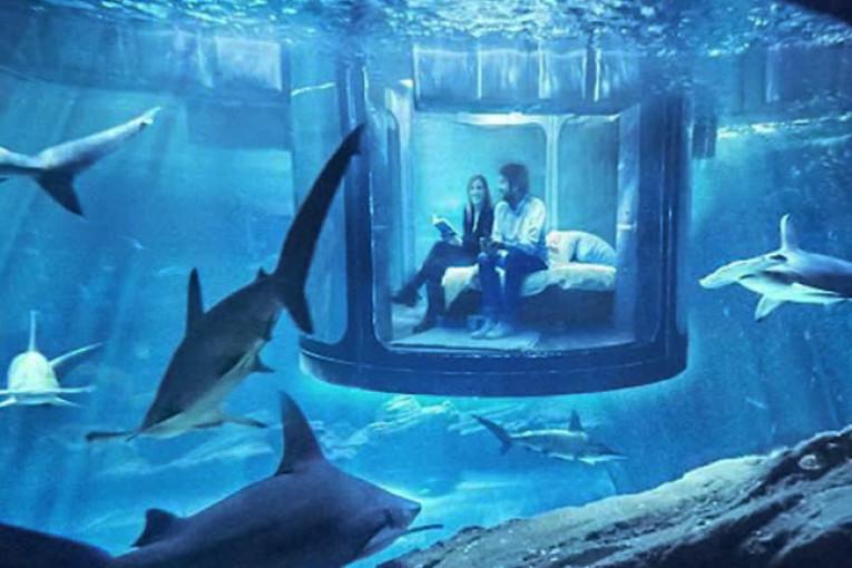 A Parigi si può dormire tra gli squali. Ecco come partecipare