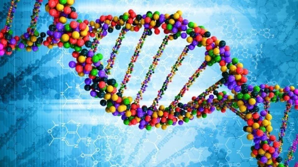 Studio Igm-Cnr: enzimi che sintetizzano nuovi 'pezzetti' del Dna danneggiato dallo stress ossidativo spesso creino genoma 'ibrido'