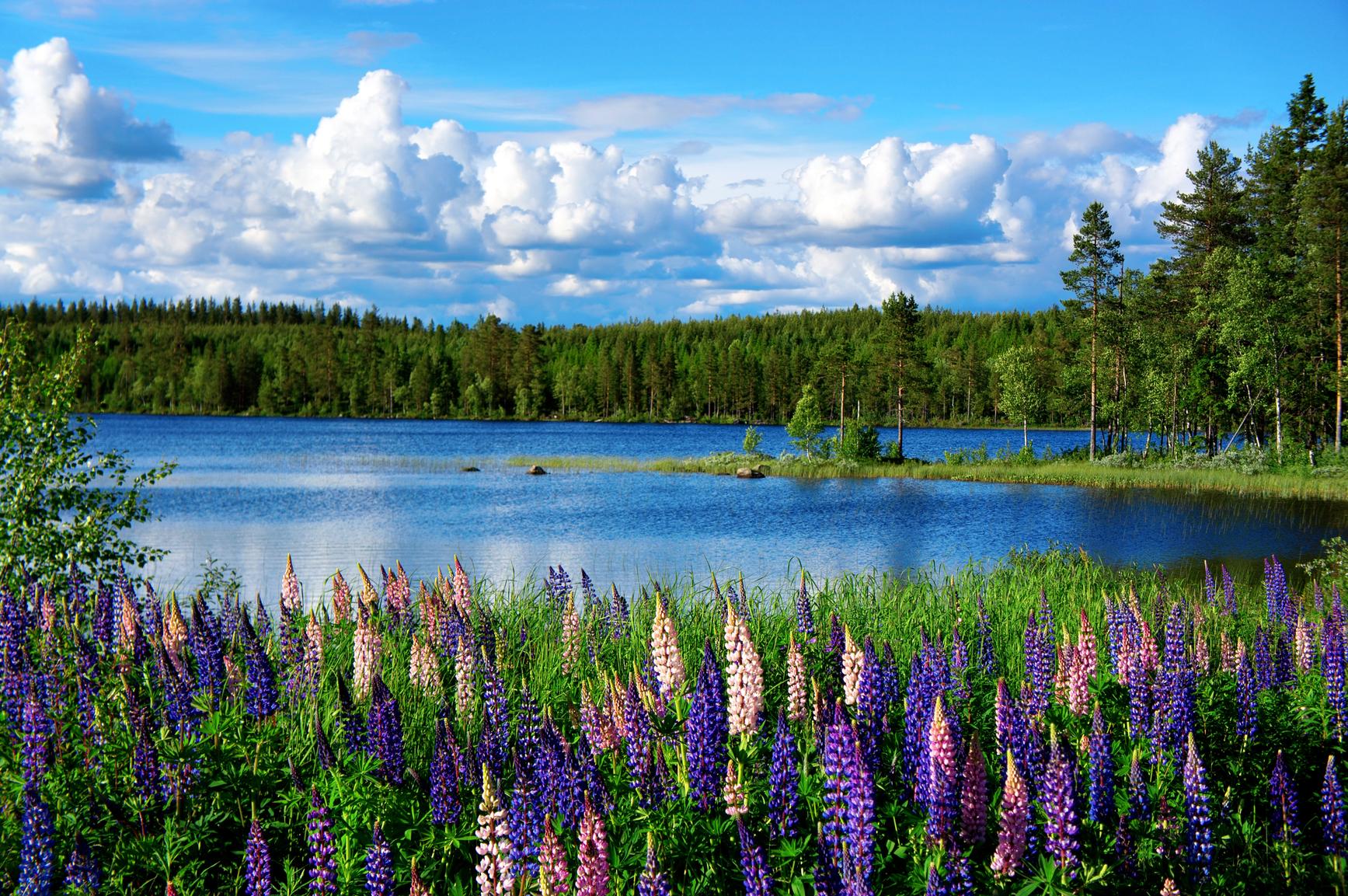 Scandinavian summer landscape