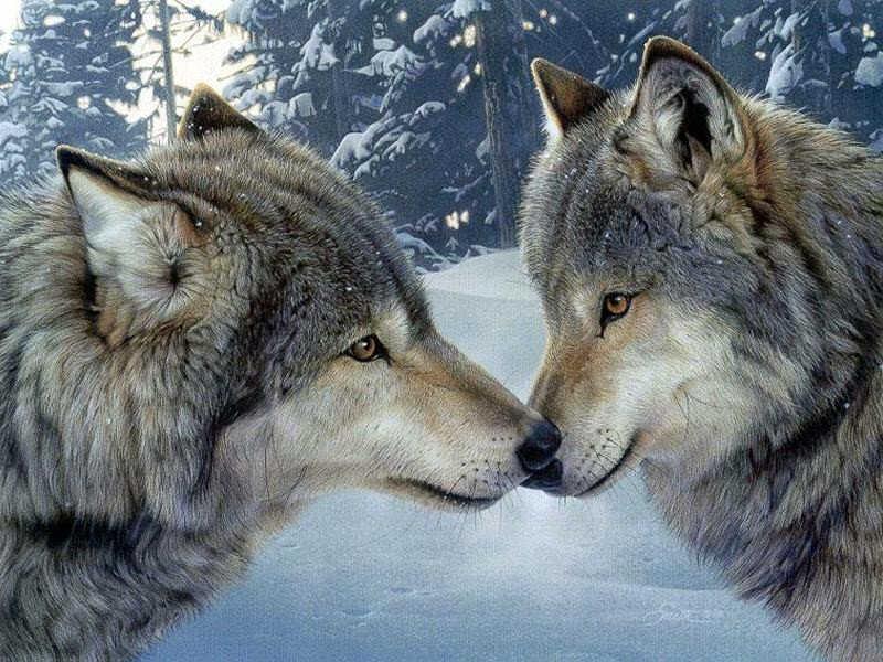 Animali M5S: Governo applichi nostre proposte salva-lupo