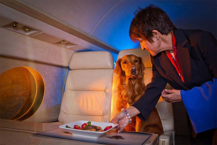 Volare con il cane in cabina. Ora si può