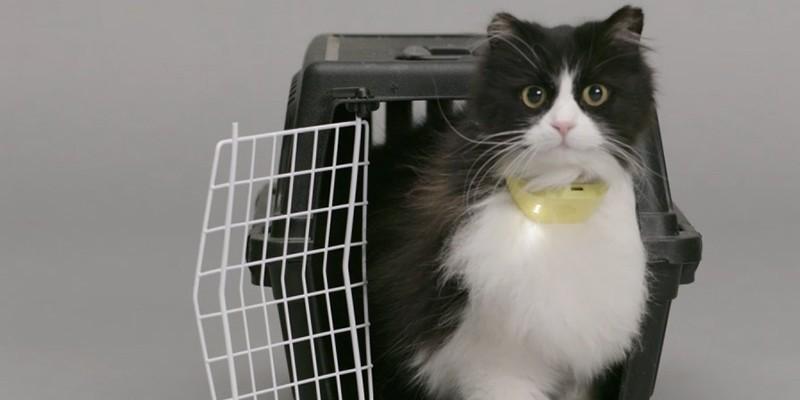 Catterbox, il collare che dà voce ai gatti