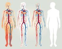 medicina vascolare
