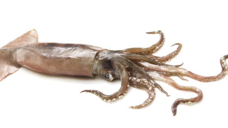 Alimentari: totani, polpi e calamari sbiancati, il merito è dell'acqua ossigenata il consumatore lo sa?