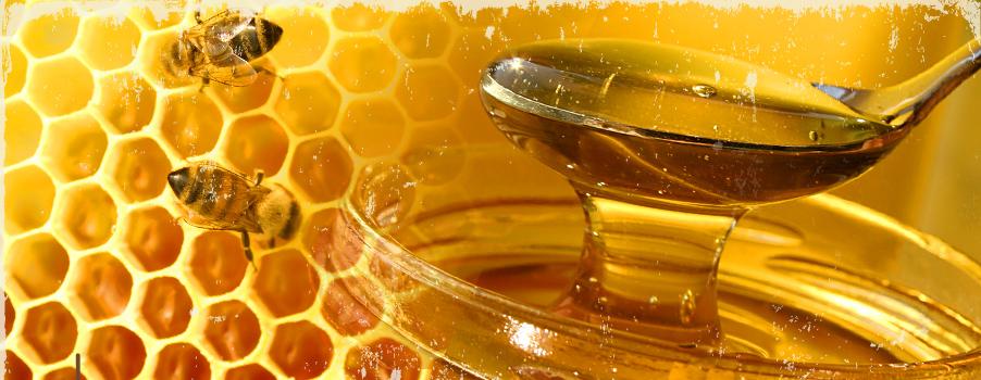 Risultati immagini per api miele
