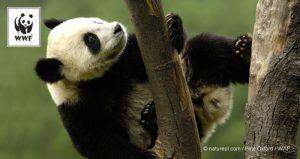 WWF PANDA LOGO1