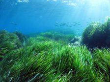 alghe piante marine
