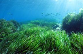 alghe_piante_marine