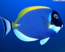pesci tropicali 44