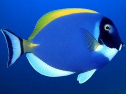 pesci_tropicali_44