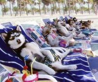 cani spiaggia
