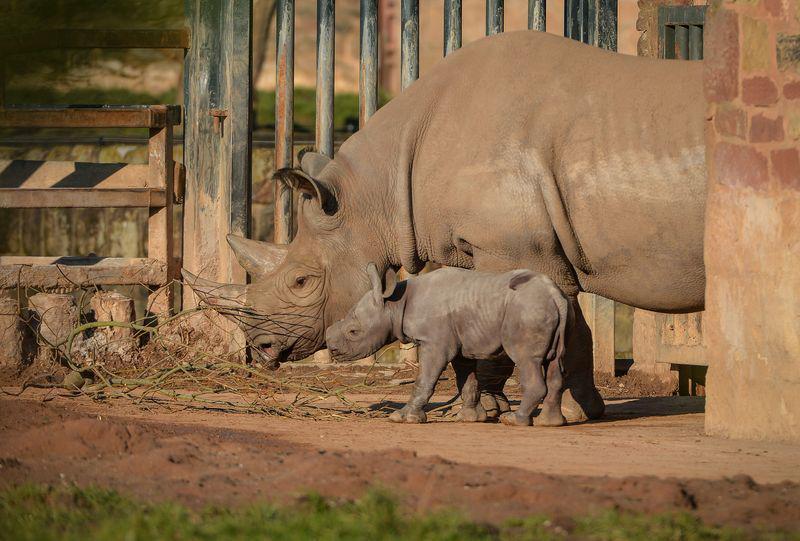 Cuccioli, al Chester Zoo due nascite che lasciano ben sperare