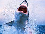 squali1